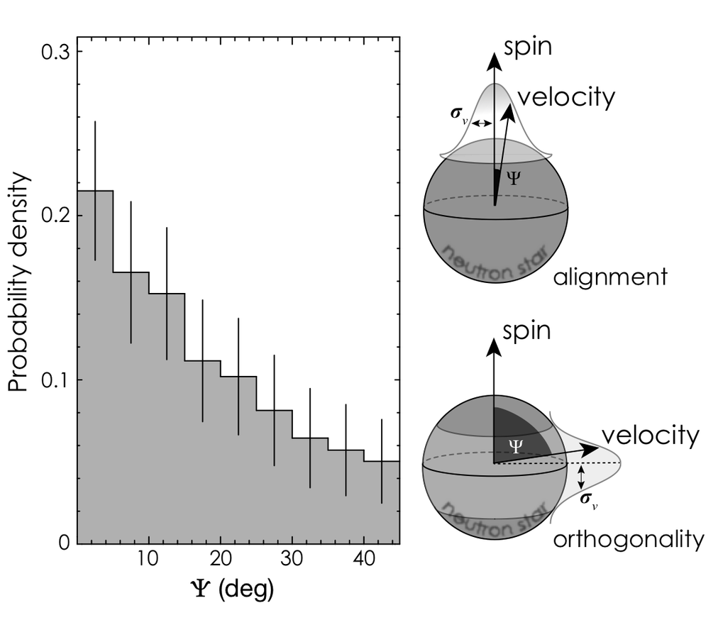 Fig. 1: Probability density of the angle between spin and velocity, derived from radio polarisation and timing observations of pulsars. It can be seen that the highest probability corresponds to angles near 0 degrees, denoting the preference towards alignment and/or orthogonality between those two vectors. Note that radio polarisation and timing observations alone cannot distinguish between those two configurations. The schematics on the right show the two preferred configurations, i.e. that of orthogonality and of alignment between spin and velocity.