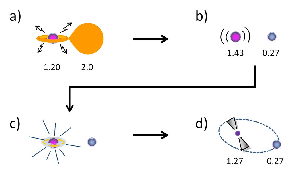The final path of close binary stellar evolution according to the new scenario: (a) An X-ray binary with an accreting white dwarf of initially 1.2 solar masses and a donor star of about 2.0 solar masses. (b) Although the white dwarf has accreted sufficient matter to grow beyond the critical Chandrasekhar mass limit, it does not collapse immediately into a neutron star after termination of the mass transfer because it is rotating very fast and is thus sustained by centrifugal forces. (c) Eventually, this massive white dwarf loses sufficient spin angular momentum to slow down and finally collapse directly into a millisecond radio pulsar in an eccentric orbit (d). The companion star is a low-mass helium white dwarf, the remnant of the original donor star. All masses shown are in solar masses.